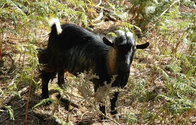 Les animaux de la ferme : ânes, chèvres, oies...