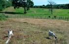 Chêvres et chevaux au camping Mané Guernehué