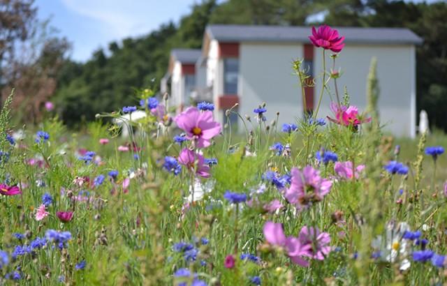 Les Hauts de Toulvern 3 résidences écologiques