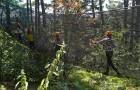 Filet dans les arbres