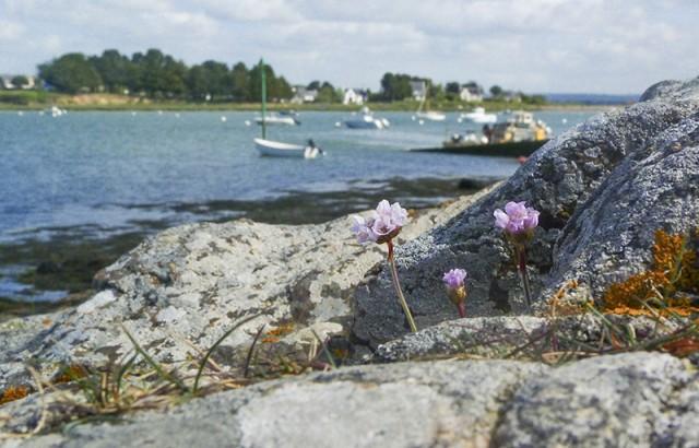 Golfe du Morbihan Donatienne Guillaudeau