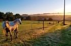 Les chevaux devant les Hauts de Toulvern en automne
