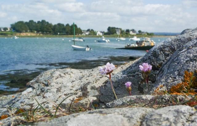 A la Pointe du Passage © Donatienne Guillaudeau