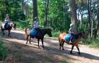 Balade à poney dans le Golfe du Morbihan