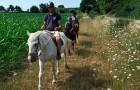 Balade à cheval dans le Golfe du Morbihan