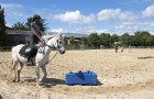 Cours d'équitation et stage à Mané Guernehué